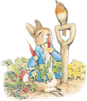 pb-peterrabbit